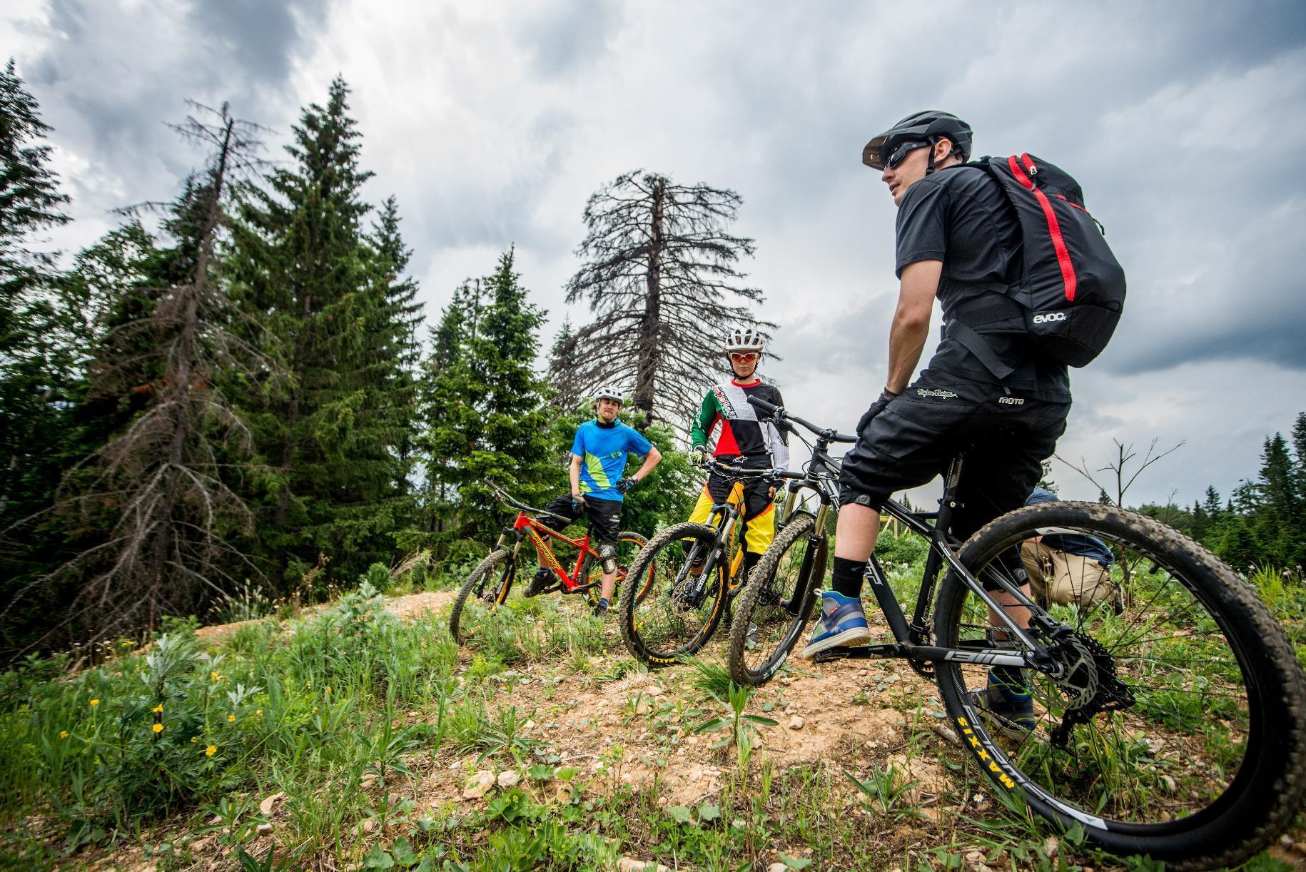 фото 3 велосипедистов на природе
